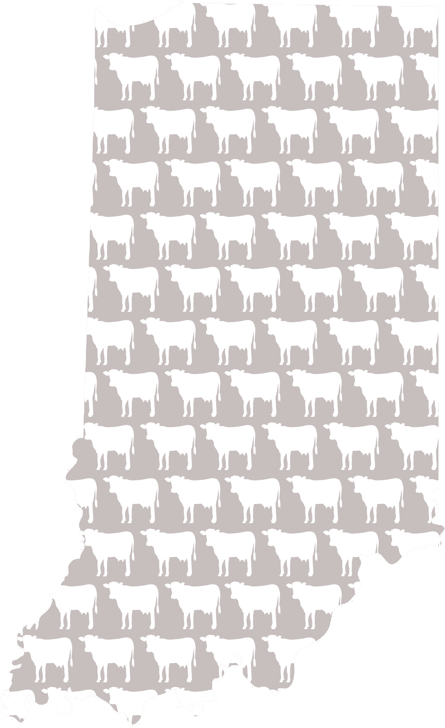 Indiana Cows